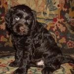 Otis Photo 1