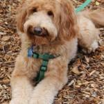 Cooper (#2) Photo 3